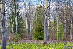 春天野花地毯在森林里 库存图片