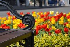 春天长凳 免版税库存图片