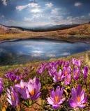 春天雪融解和在喀尔巴阡山脉的谷 免版税库存照片