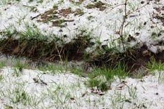 春天雪 免版税图库摄影