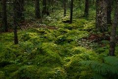 春天青苔森林 库存照片