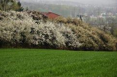 春天领域。 库存图片