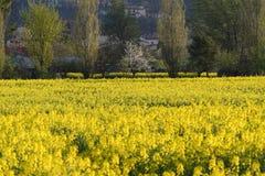 春天领域 图库摄影