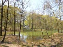 春天风景在公园 免版税库存图片