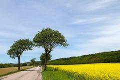 春天风景在南瑞典 库存图片