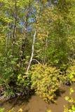 春天风景在有一条小河的公园Izmailovo 免版税库存图片