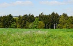 春天风景德国山领域森林 免版税库存图片
