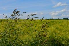 春天风景德国庭院领域开花夏天太阳 免版税库存图片