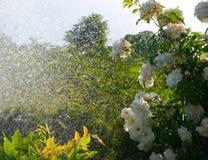春天风景德国庭院领域开花夏天太阳 库存图片