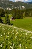 春天风景施蒂里亚,奥地利 库存图片