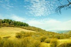 春天风景,绿色草坪背景的具球果森林 免版税图库摄影