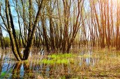 春天风景-森林岸边的树充斥了与溢出的河水 免版税库存图片