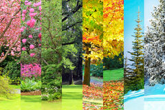 春天,夏天,秋天,冬天拼贴画 库存图片