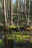 春天,太阳木头。 春天横向 免版税库存图片