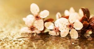 春天,春天概念-桃红色开花横幅或问候汽车 免版税库存图片