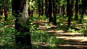 春天,森林,温暖的晴天 影视素材