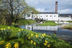 春天,爱尔兰 免版税库存图片