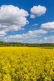 春天,瑞典的颜色 库存图片