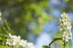 春天,苹果树开花 库存图片