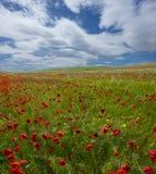 春天,鸦片领域,在背景中 免版税库存图片