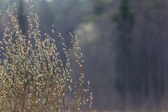春天, A自然本底 免版税库存照片