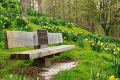 春天:公园长椅在黄水仙海  免版税库存图片