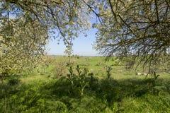 春天:多小山风景宽度用花装饰的树 亚尔他Murgia国家公园:普利亚,意大利 免版税图库摄影