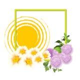 春天 与太阳的春天框架 库存照片