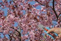 春天从事园艺 免版税库存图片