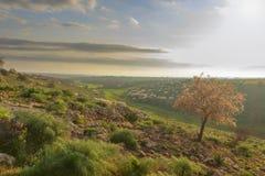 春天 亚尔他Murgia国家公园:在绽放的狂放的扁桃在黎明 普利亚意大利 免版税库存图片