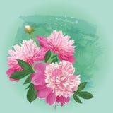 春天贺卡的桃红色牡丹花束  免版税图库摄影