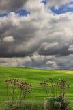 春天 在普利亚和巴斯利卡塔之间:与绿色玉米田的多小山风景 意大利 免版税库存图片