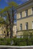 春天 在裁减树的年轻叶子在老处所的一个黄色二层楼的房子里不高大厦 库存图片