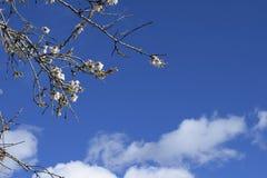 春天 弄脏 开花的树 免版税库存照片