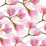 春天水彩木兰背景 花两木兰树层数和分支  库存照片