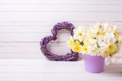 春天水仙或黄水仙在紫罗兰色罐和得体开花 图库摄影