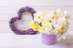 春天水仙或黄水仙在紫罗兰色罐和得体开花 库存照片