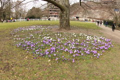 春天绽放在卡洛维变化 免版税库存照片