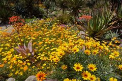 春天绽放在塔夫脱植物园的加利福尼亚, Ojai C 图库摄影
