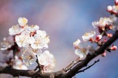 春天绽放 免版税库存照片