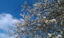 春天绽放 库存照片