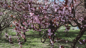春天绽放 库存图片