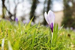 春天4月生气勃勃 图库摄影