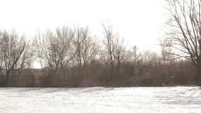 春天3月风景,全景-光秃的树在一条冻河附近增长 股票录像