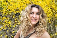春天 灌木forzitsiya的开花的黄色花 库存图片