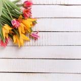 春天黄色和桃红色郁金香花 图库摄影