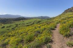 春天绿色在绍森欧克斯加利福尼亚 免版税库存照片