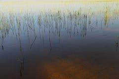 春天年轻绿色用茅草盖海岸线在日落光 免版税库存图片