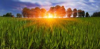 春天绿色的领域 免版税库存照片