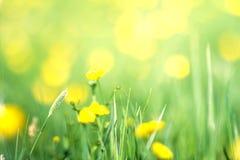 春天黄色花在绿草背景中 在su的花 库存照片